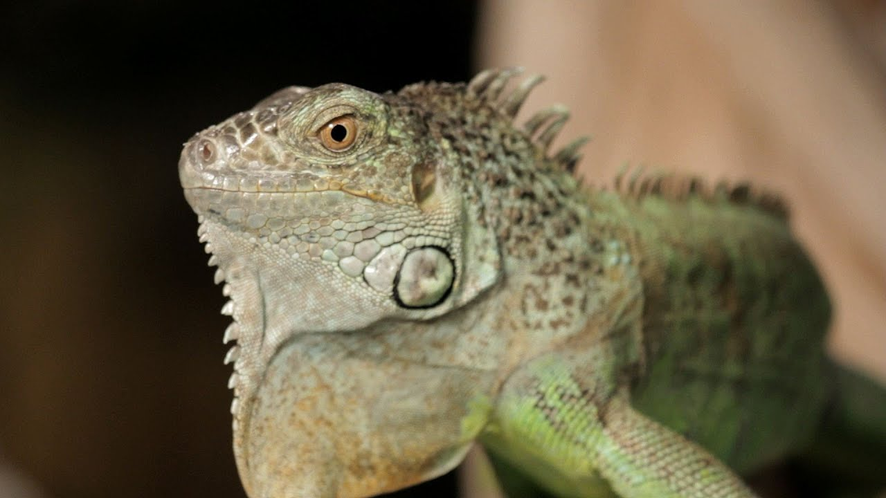Cool Reptiles For Pets | www.pixshark.com - Images ...