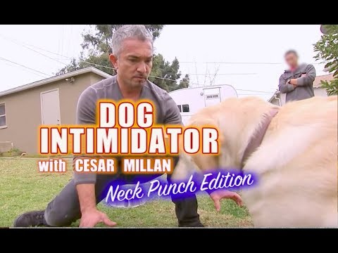 Download Malignant Behavior: The Cesar Millan Effect (Excerpt: Dogs, Cats and Scapegoats
