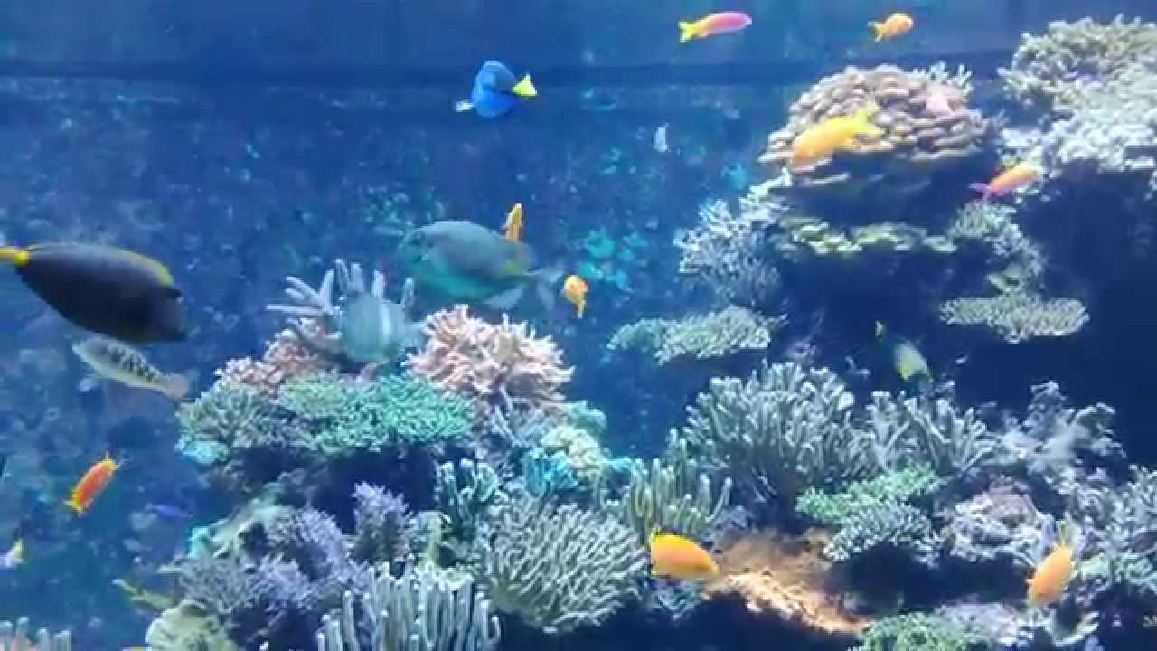 Fish aquarium in sentosa - Dory Fish Sea Aquarium Singapore Resort World Sentosa