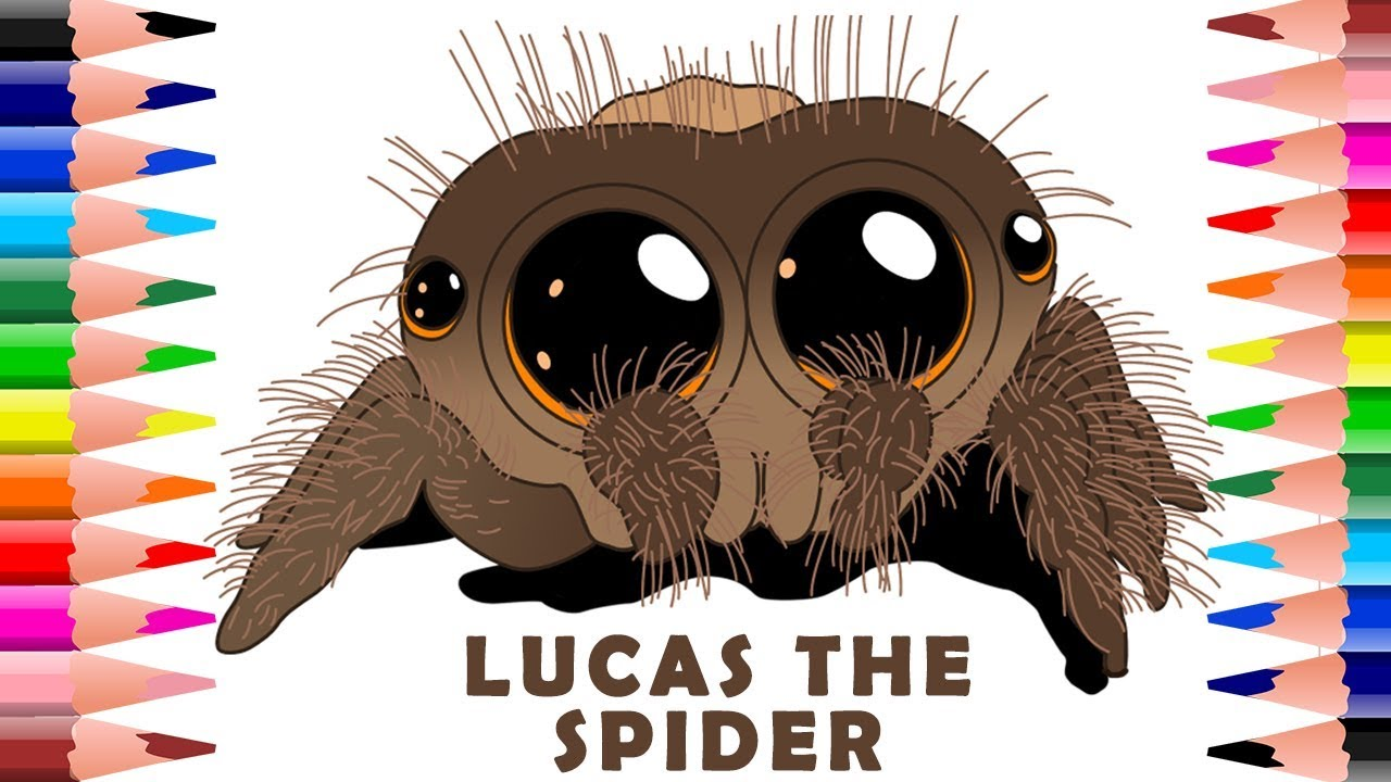 How To Draw And Colour Lucas The Cutest Spider Colouring