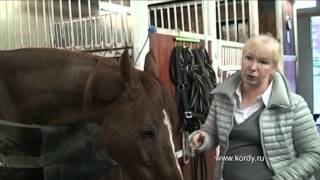 Как вылечить лошадь за десять дней?