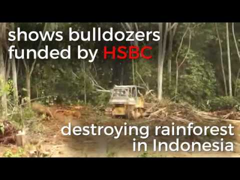 HSBC Caught Funding Deforestation