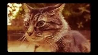 Кошка может чувствовать засаду😆