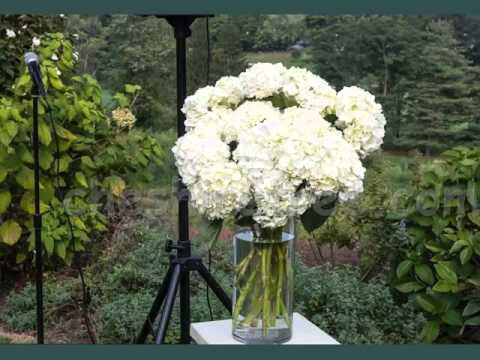 White Hydrangea In Vase Beautiful White Folwers Images Youtube