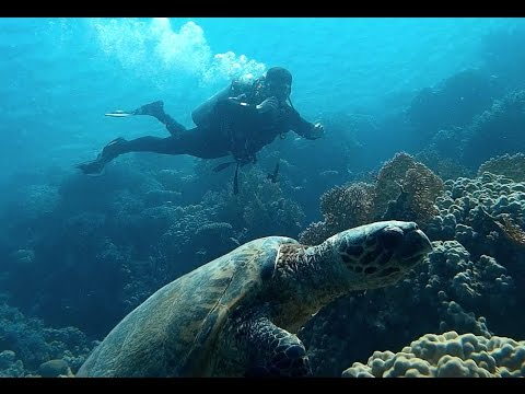 Treasuries of Red Sea: Diving @ Ras Mohammad pt.1
