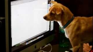 Dog Fails to eat mouse
