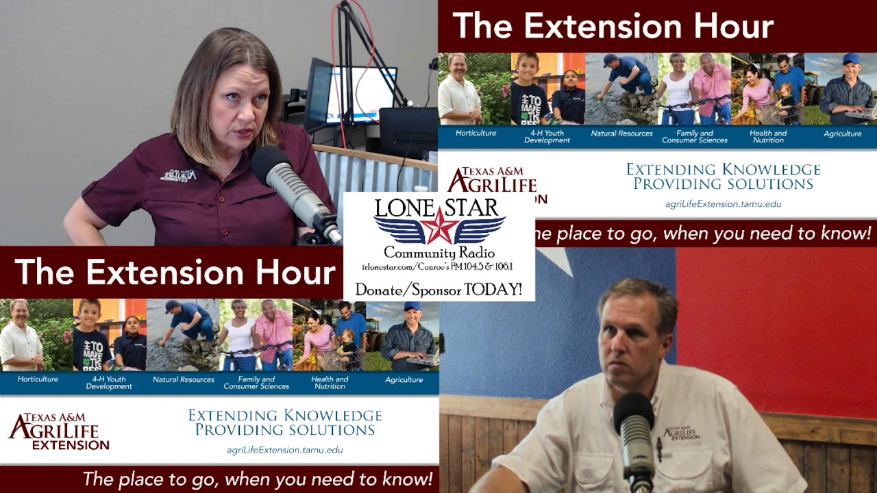 6.26.20 - Horticulture Michael Potter - The Extension Hour