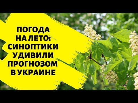 Погода на лето: Синоптики удивили прогнозом в Украине