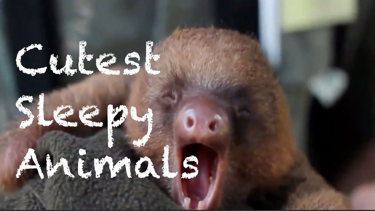 sleepy animals youtube