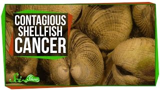 Solar-Powered Plane and Contagious Shellfish Cancer