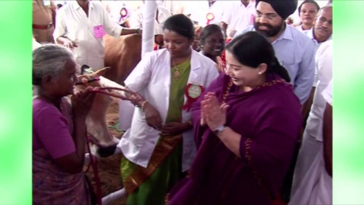 puratchi thalaivi amma gifts cows aiadmk youtube