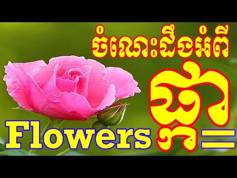 Learn The Names Of Beautiful Flowers In Cambodia | Learn Different Types of Flowers In Khmer
