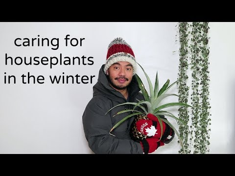 How To Care For Houseplants | Winter Season