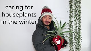Download Mp3 How To Care For Houseplants | Winter Season