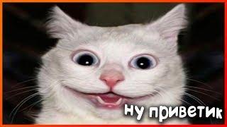 Смешные коты и кошки 2018 I Приколы с Котами I Смотреть всем !!!