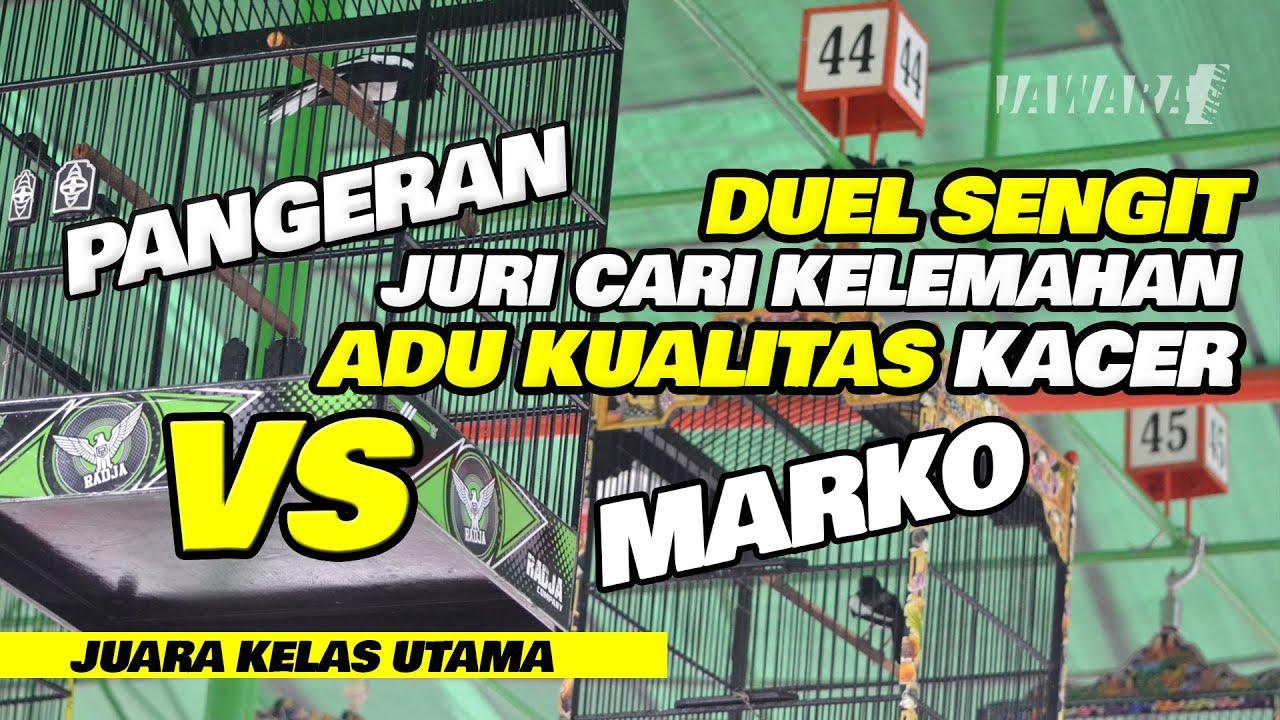 JURI CARI KELEMAHAN || ADU KUALITAS KACER PANGERAN VS MARKO || DUEL SENGIT
