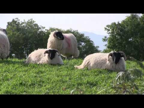 Western Ireland Tour