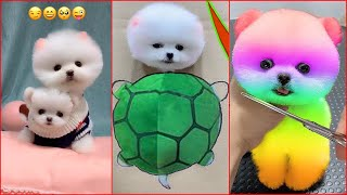 Funny and Cute Dog Pomeranian 😍🐶| Funny Puppy Videos #49