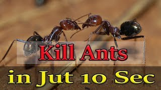 3 Easy Ways to Get Rid of Ants | Home Remedy to Kill Ants | How to Get Rid of Ants