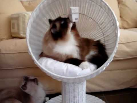 Modern Cat Furniture - The Refined Feline Kitty Ball Cat Bed™ - Floppycats