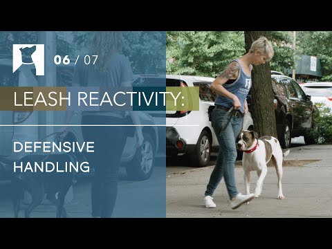 dog-training-tips:-3-defensive-handling-maneuvers-for-leash-reactive-dogs-(6/7)
