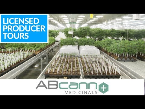 Canadian Cannabis Licensed Producer Tours - ABcann Medicinals