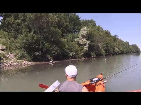 Kayaking Chicago River North Branch