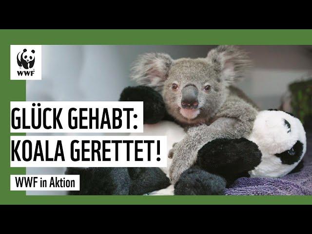 Koalaretter: Schnelle Hilfe dank schneller Spenden