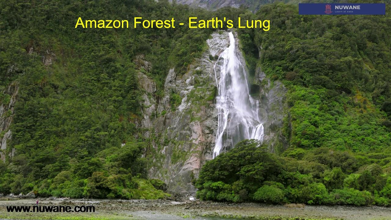 Amazon Forest - ඇමසන් වැසි වනාන්තරය