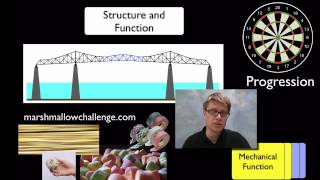 Concept 6 - Structure and Function