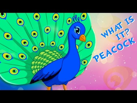 What is it - Peacock | Learning Birds | Fun Learning Videos for Children | Kids Learning Videos