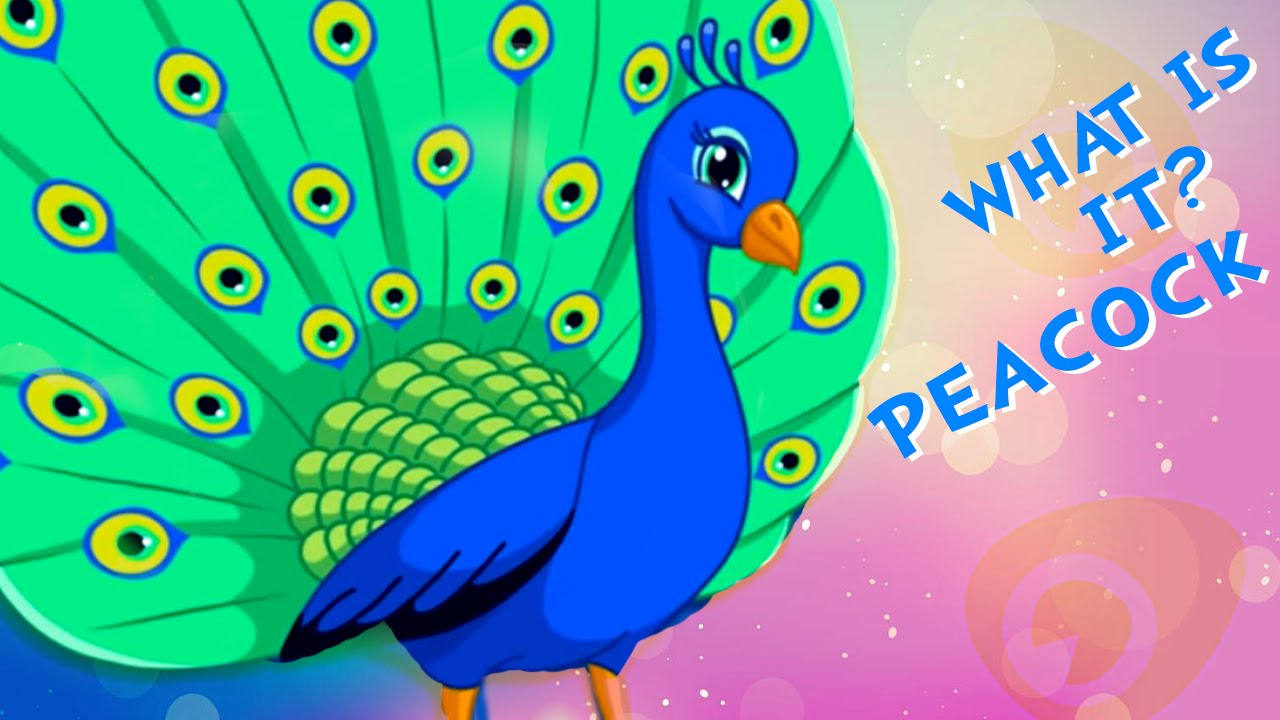 What is it - Peacock | Learning Birds | Fun Learning ...