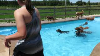 Dogs Swimming in a Pool