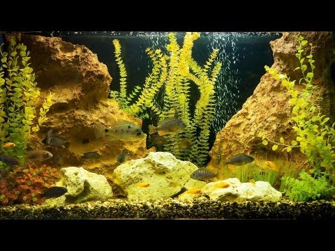 How to Deal with Green Fish Tank Water |...