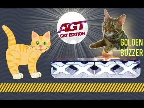 Bengal Cats React To : Cat Tricks | How To Train Your Cat - AGT (2019) - Ep.24