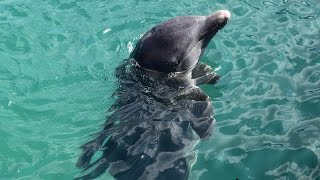 Catamaran excursion - Dolphin and Snorkeling