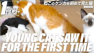 Young cat saw cats fight for the first time