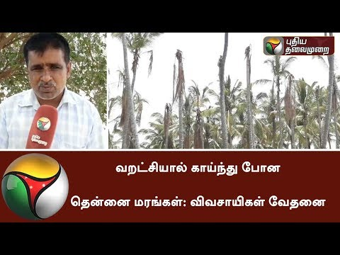 Farmers worried about 40K Coconut Trees Die due to drought in Coimbatore