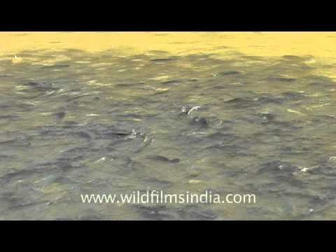 Swim For The Lord, Nageshwar Temple - Dwarka