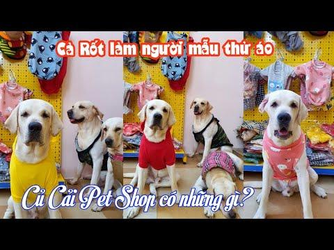 Siêu mẫu Cà Rốt phạm tội tày trời - Củ Cải Pet Shop bán những gì