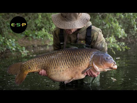 Old Gold | Terry Hearn | Iconic Carp Fishing