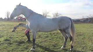 la-la-la horse