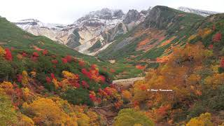 北海道十勝岳温泉郷の紅葉「光走る」2020