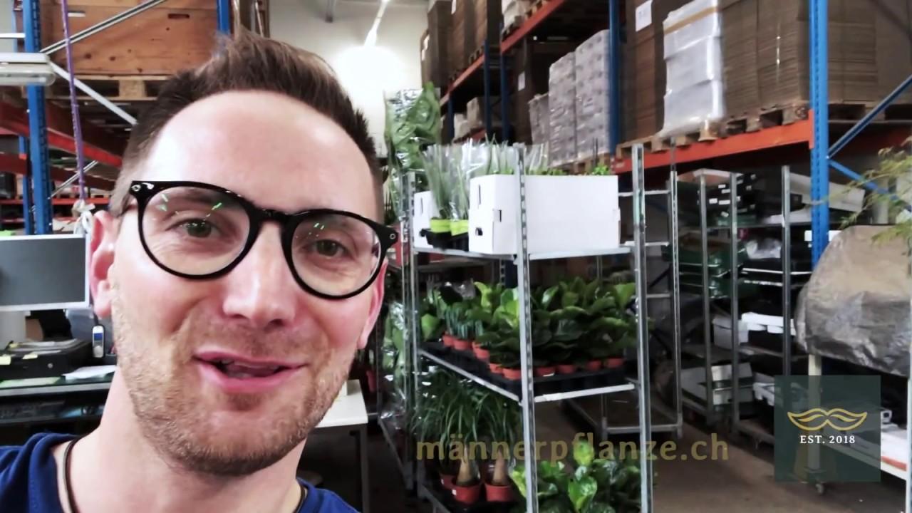 «Production-Day» bei Männerpflanzen.