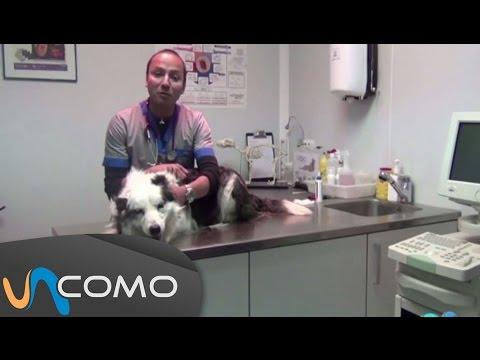 los-mejores-consejos-veterinarios-para-tu-perro