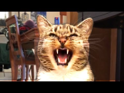 THE BEST FUNNY CAT VIDEOS OF THE WEEK