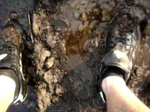Addidas Trainers In Cow Manure Doovi