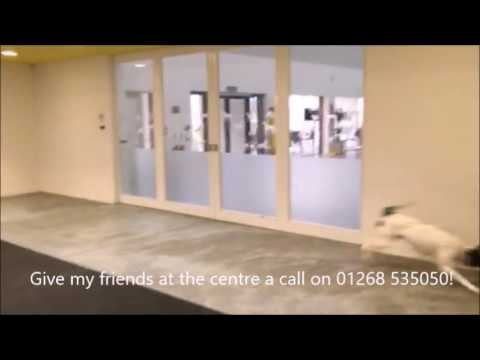 Dogs Trust Basildon - Monty