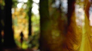 Alcest - Untouched (Unofficial Video)