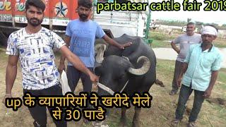 Up के व्यापारीयो ने खरीदे श्री तैजा जी पशु मेला से 30 पाडै || parbatsar cattle fair 2019||